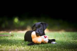 Dog lying on grass with teddy bear